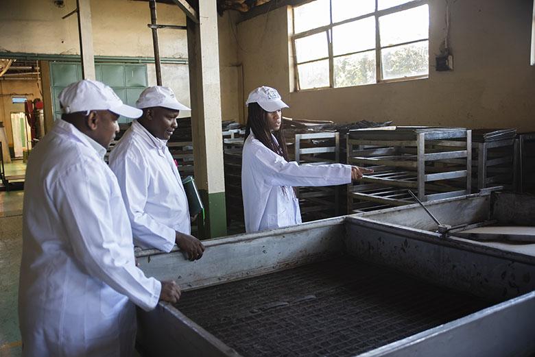 Tea factory - Social Impact
